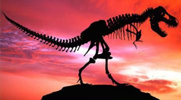 Dinosaurios-Gifs-muy-Divertidos-gifmaniacos.es (1)